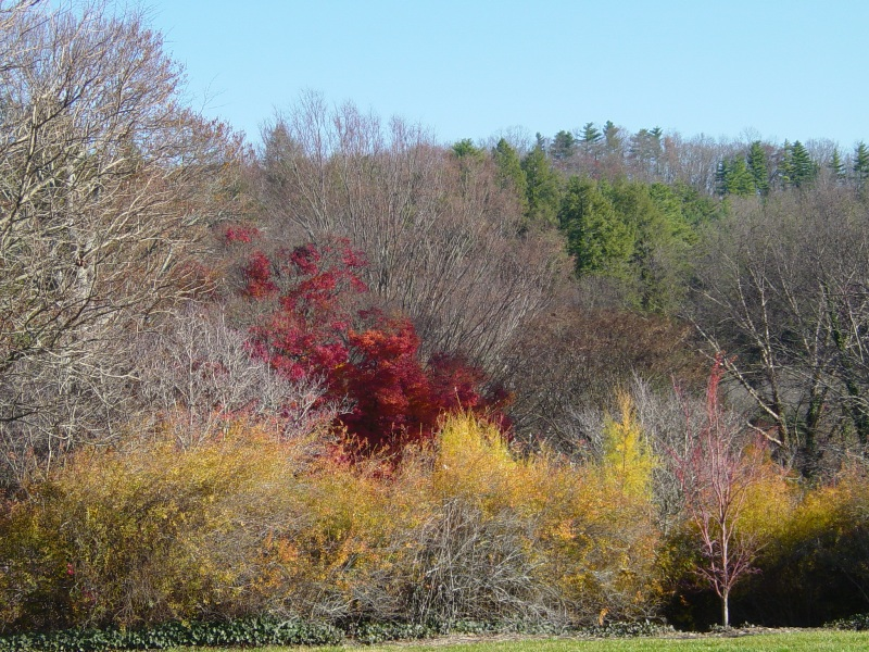 Biltmore grounds color