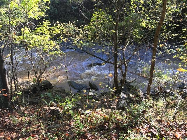 2017-10-23 16.48.24 Botanical Stream - small